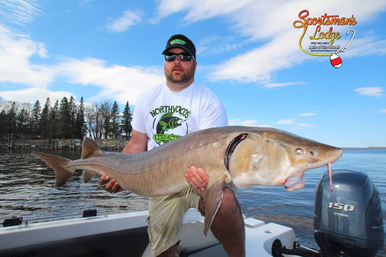 Sportsman 39 s lodges minnesota fishing reportweekly south for Lake mcclure fishing report
